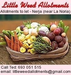 Little Weed Allotments