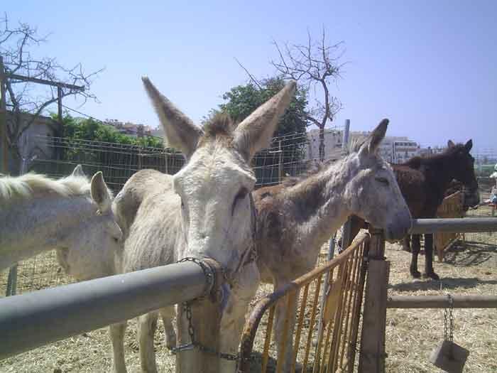 Donkey Sanctuary Nerja Nerja Today