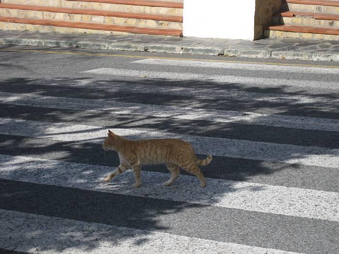 cavescat