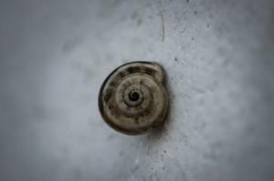 Riogordo Festival Snails