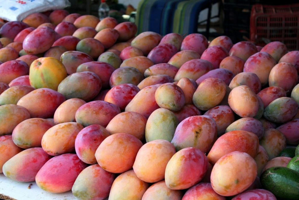 mangoes Andalusia Spain