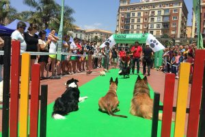 Malaga-dog-party