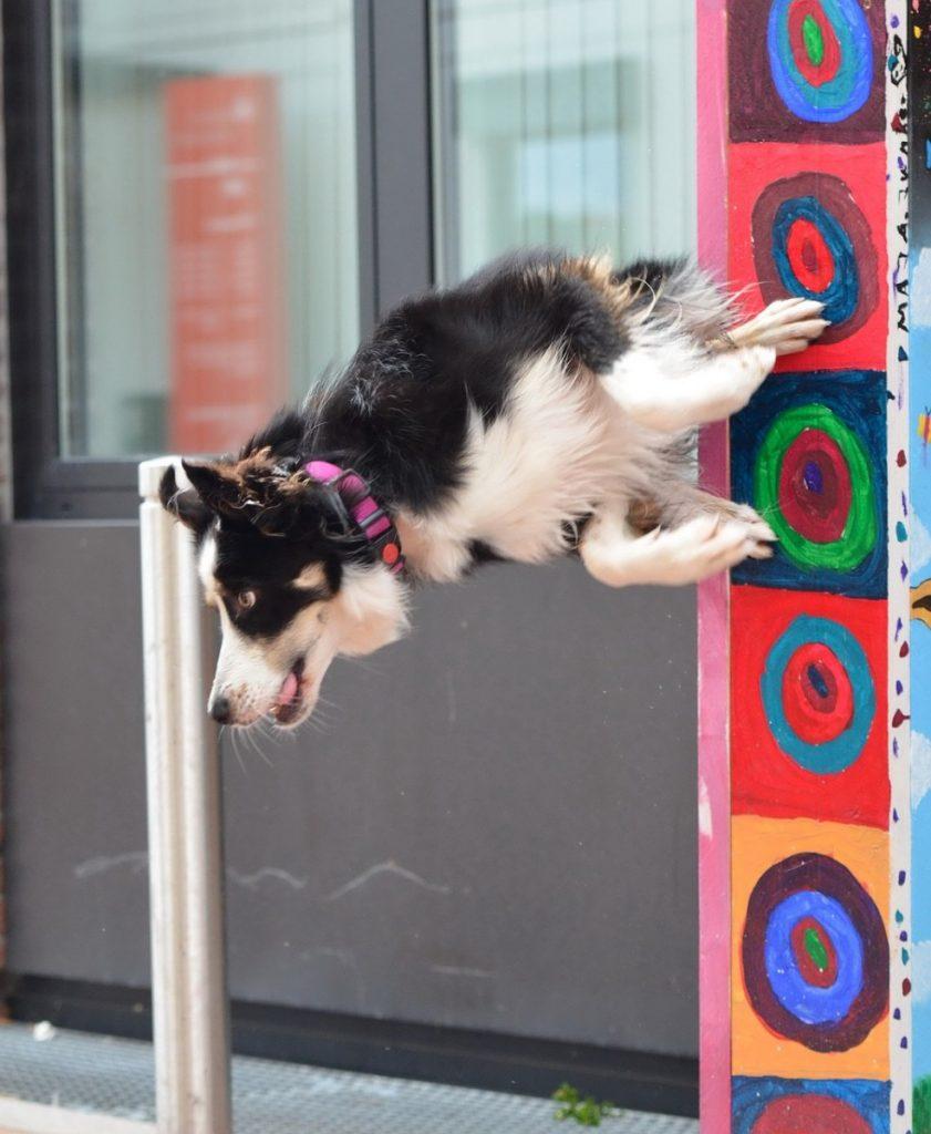 Dog show Malaga