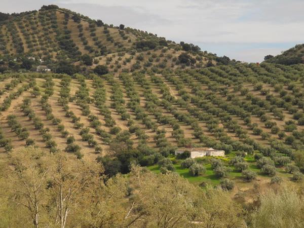 ndalucia-spain-olive-groves