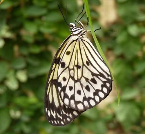 Butterfly Park, Benalmádena