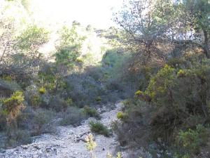 Walking in Spain